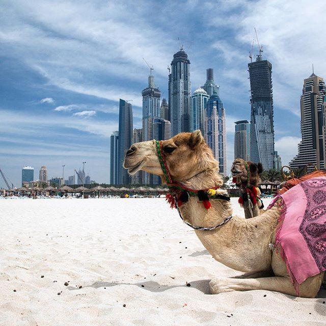резидент в ОАЭ